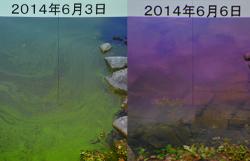 微生物の働きにより、わずか3日で池の底が見えるようになった